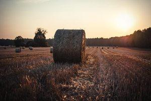 Hay in field